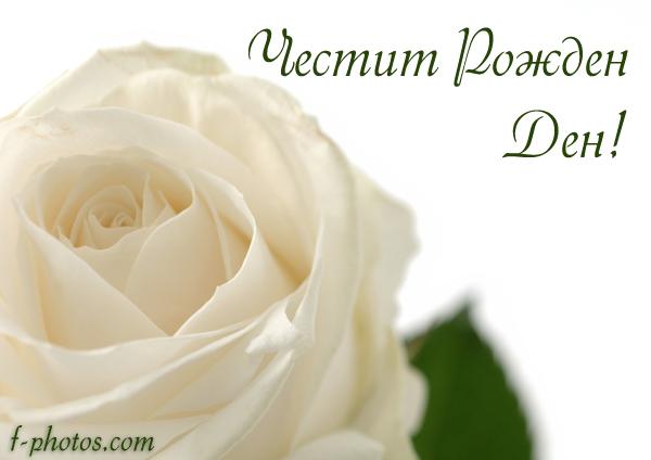 Бяла роза за рожден ден